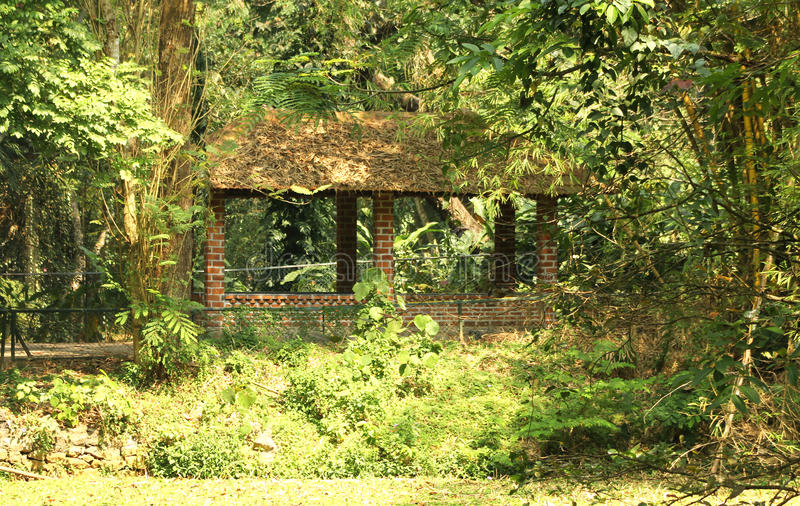 Download Jungle hut stock photo. Image of rainforest, lush, green - 26268368
