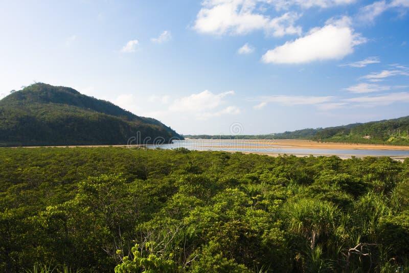 Jungle japonaise de palétuvier images stock