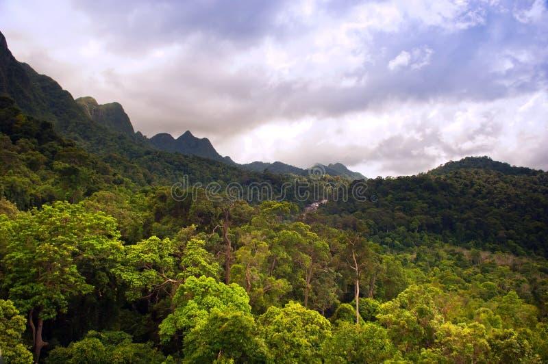 Download Jungle Landscape Stock Photos - Image: 20406043
