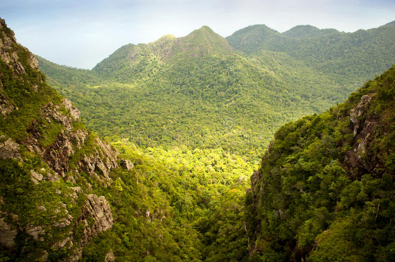 Jungle Landscape royalty free stock image