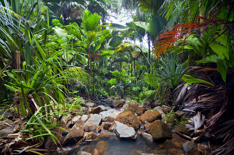 Download Jungle Landscape With Creek Stock Image - Image of exotic, jungle: 39503665