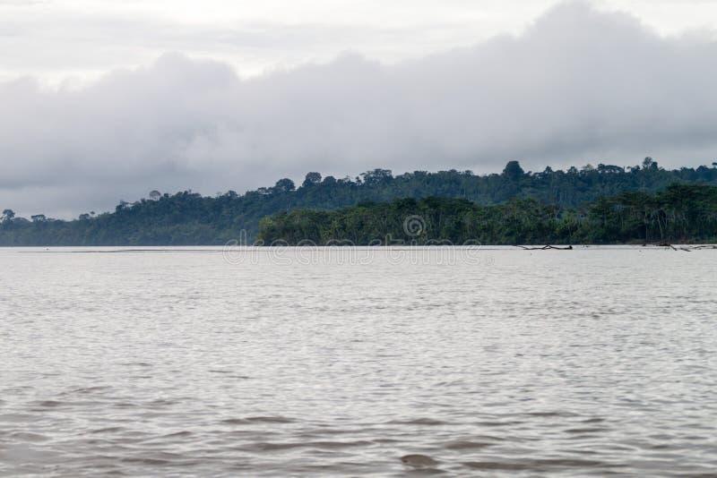 Jungle le long de rivière Napo photos stock