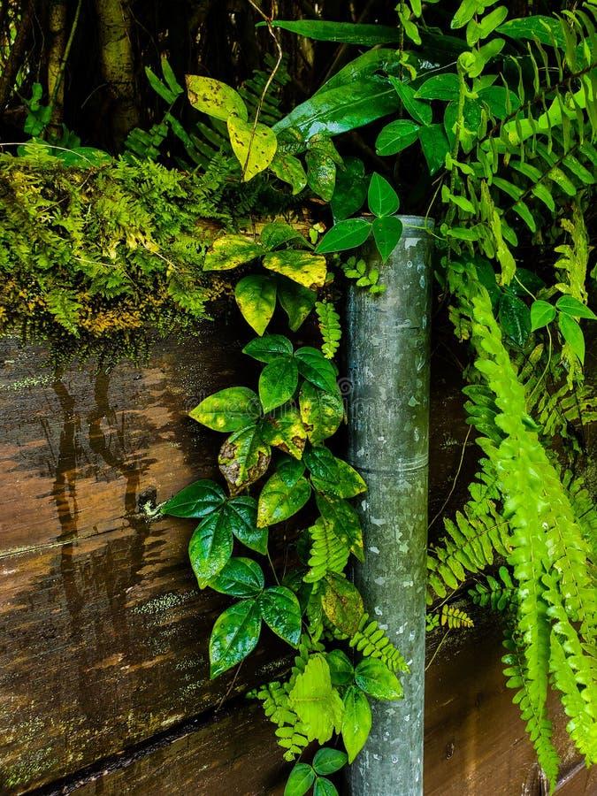 Jungle life royalty-vrije stock fotografie