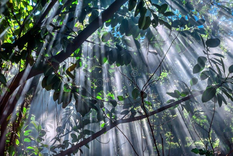 Jungle-light royalty free stock photos