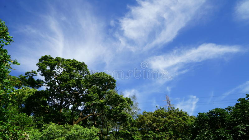 Jungle moment in nice weather royalty free stock photography