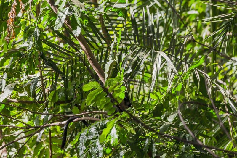 Jungle in National Park , Tanzania stock photos