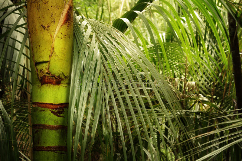 Download Jungle stock photo. Image of flora, growth, outside, bush - 33307508