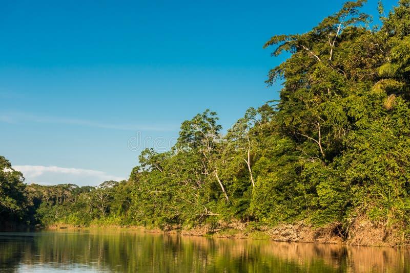 Jungle péruvienne Madre de Dios Pérou d'Amazone de rivière de bruyère photo libre de droits