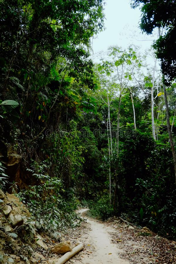 Jungle path across tribal land. Santa Marta, Magdalena / Colombia - MARCH 10 2016 : jungle path across tribal land stock image