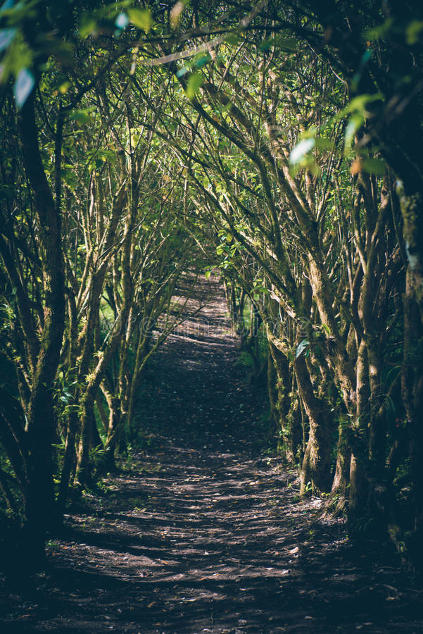 Jungle path. royalty free stock photos