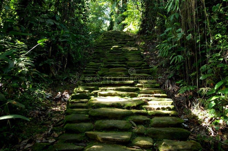 Jungle path royalty free stock image