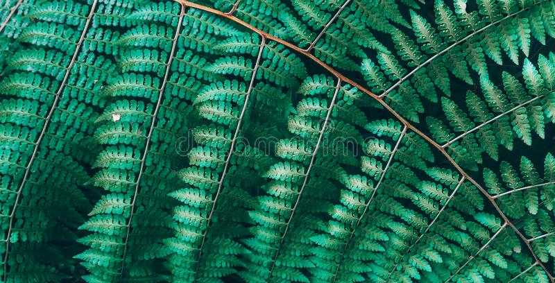 Jungle plants background tropical leaves pattern. Tropical thickets and bushes in the jungle royalty free stock photography