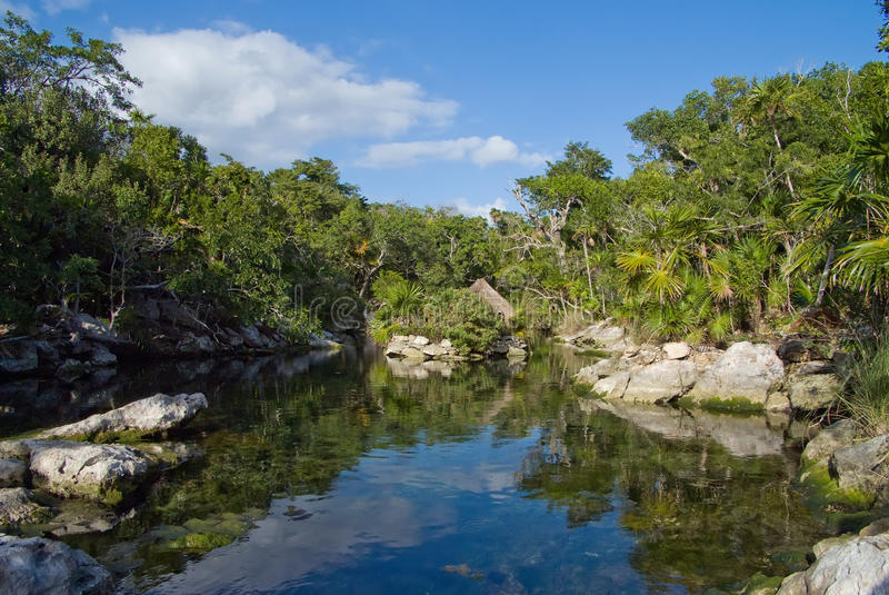 Jungle Pond Royalty Free Stock Images