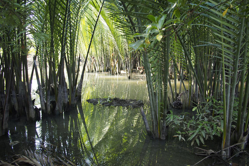 Jungle près de canal images libres de droits