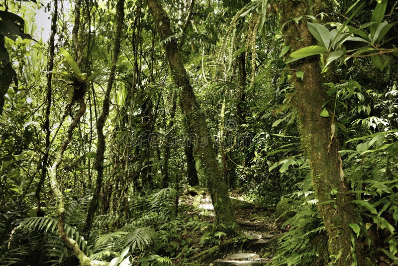 Jungle primaire tropicale d'Amazone de vert de forêt tropicale   images libres de droits
