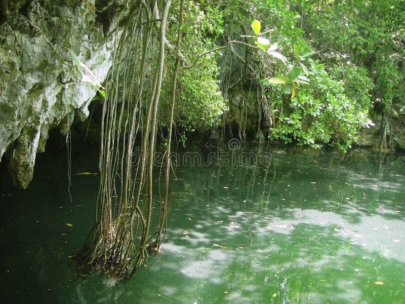 Jungle Quintana Roo maya de Maya de Cenote la Riviera photographie stock