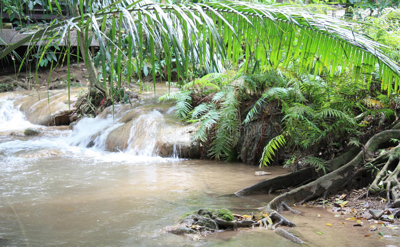 Jungle river. Natural landscape of river in a jungle royalty free stock photo