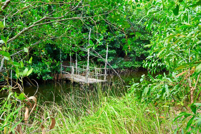 Jungle river with little wooden pier on it in cambodia kampot. With plants wood water green royalty free stock images
