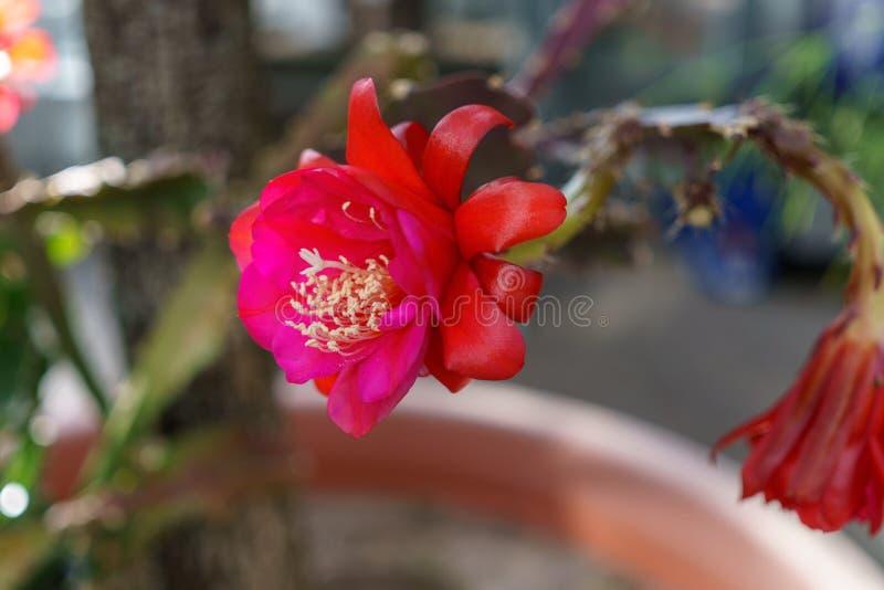 Jungle rouge de fleur photographie stock libre de droits