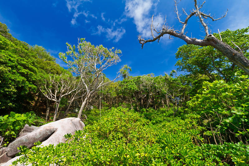 Download Jungle Scenery Of Similan Islands Stock Image - Image: 27855687