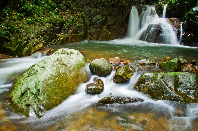 Jungle Scenery in Thailand royalty free stock photos