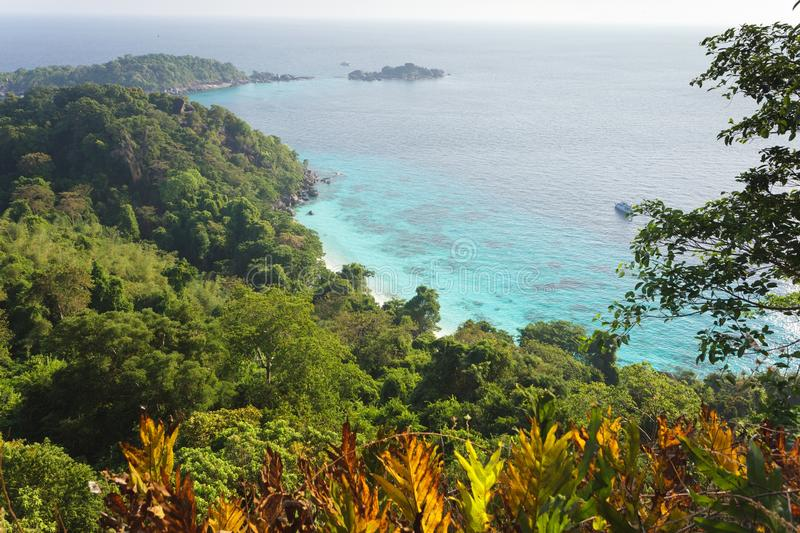 Jungle and sea landscape
