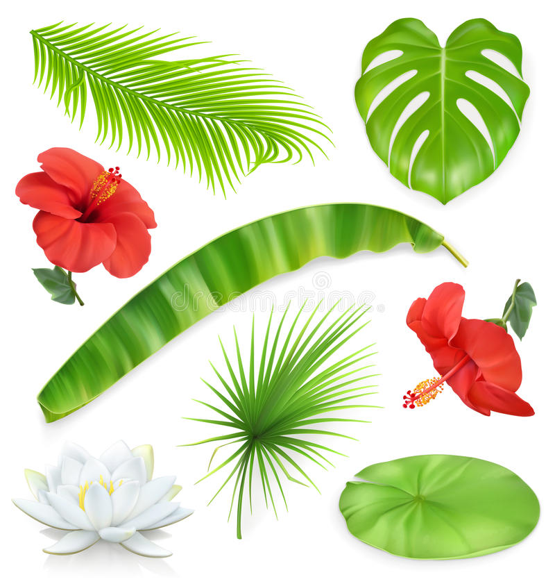 Jungle. Set of leaves and flowers. Tropical plants. Vector icons. Jungle. Set of leaves and flowers. Tropical plants. 3d vector icons royalty free illustration