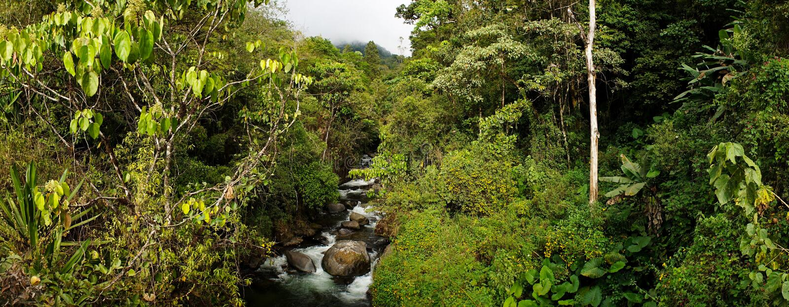 Jungle setting with river in Cloudbridge Nature Reserve, Costa Rica. royalty free stock image