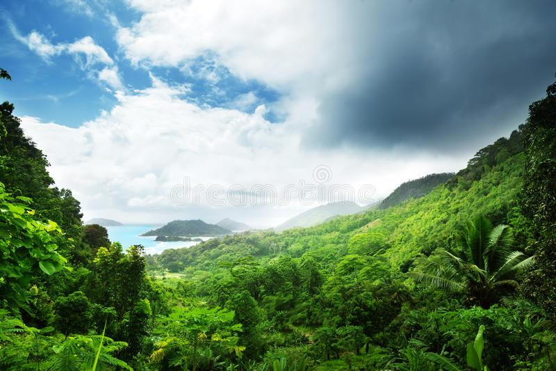 Jungle of seychelles island royalty free stock photos