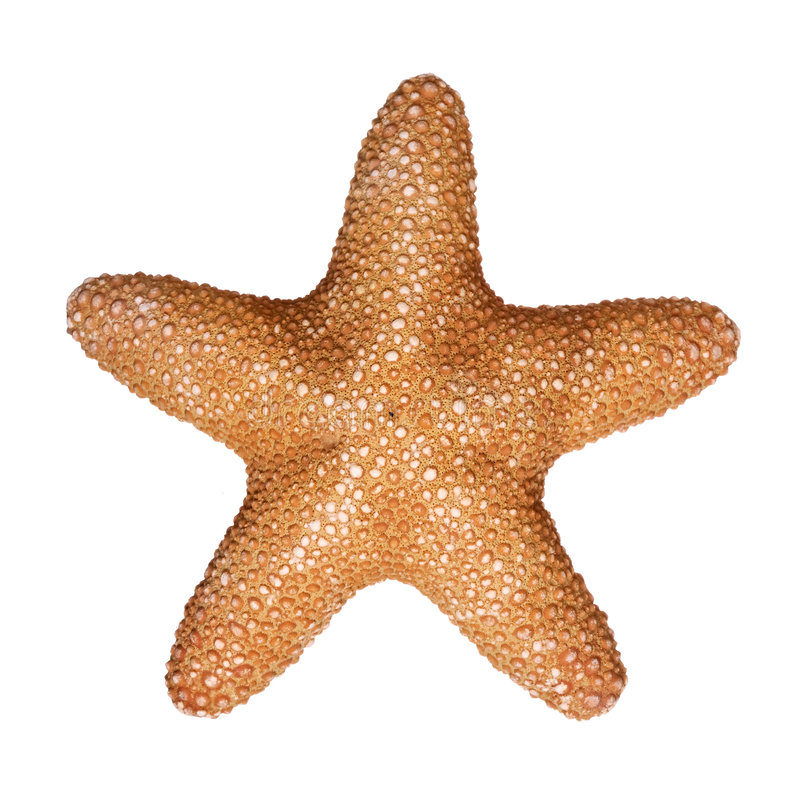 Download Jungle Star Stock Photo - Image: 3056400