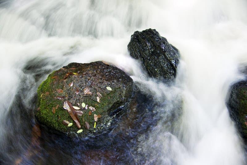 Jungle stream royalty-vrije stock afbeelding