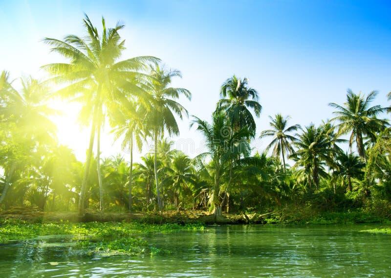Download Jungle Thaïlande photo stock. Image du paume, lumière - 8659404