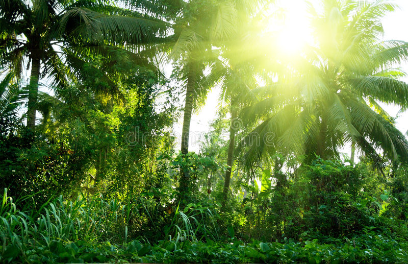 Jungle of Thailand. Sunny green jungle of Thailand stock image