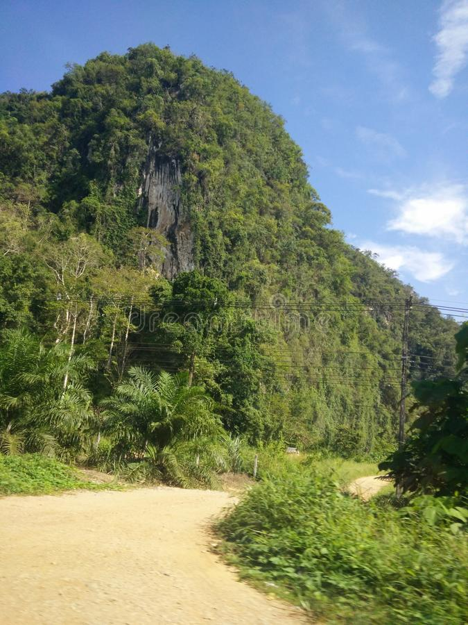 Jungle in thailand royalty free stock photo