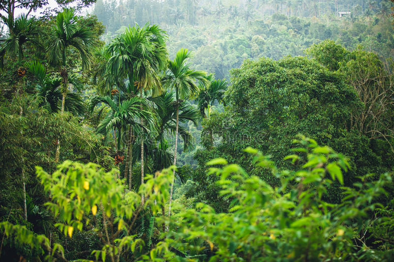 Jungle of Thailand. The green jungle of Thailand - hillsides and palm trees stock image
