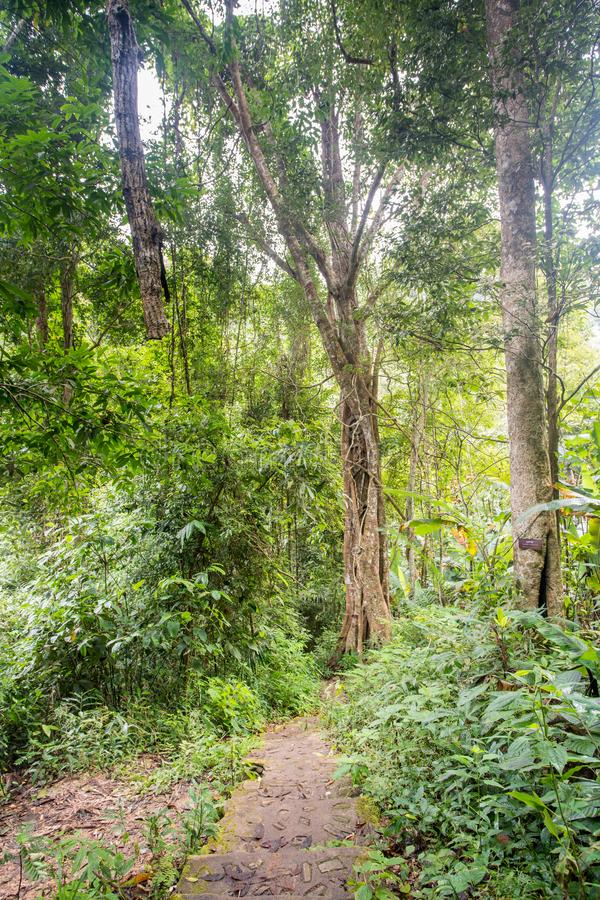 The jungle of the Thailand. In the jungle of the Thailand walk this way down royalty free stock photography