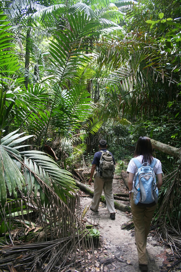 Free Jungle Trek Stock Photo - 1645210