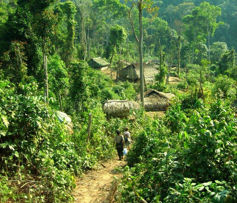 Jungle trek royalty free stock photo