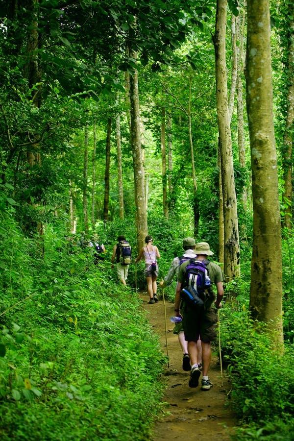 Download Jungle trek stock image. Image of land, landscape, hike - 3279087