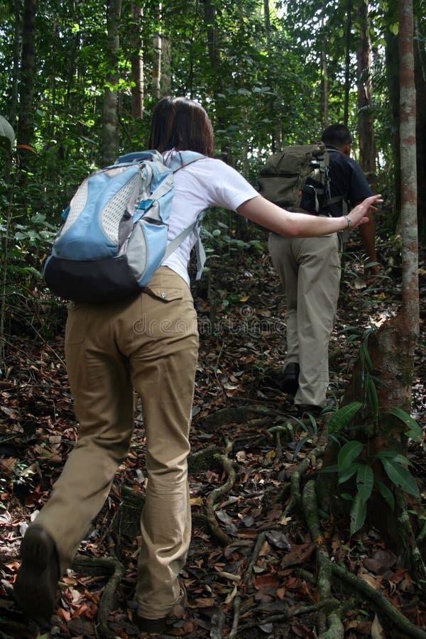 Jungle-Trekking royalty free stock images