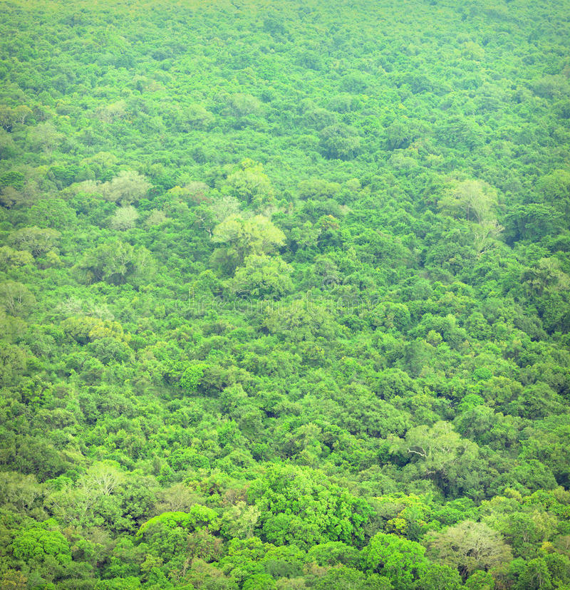 Jungle. Tropical forest from bird`s eye view. Sri Lanka stock image
