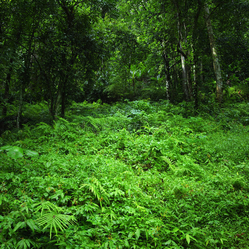 Jungle tropical forest wild landscape stock image