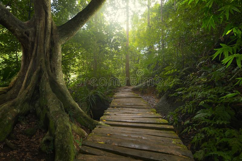 Jungle tropicale photo stock