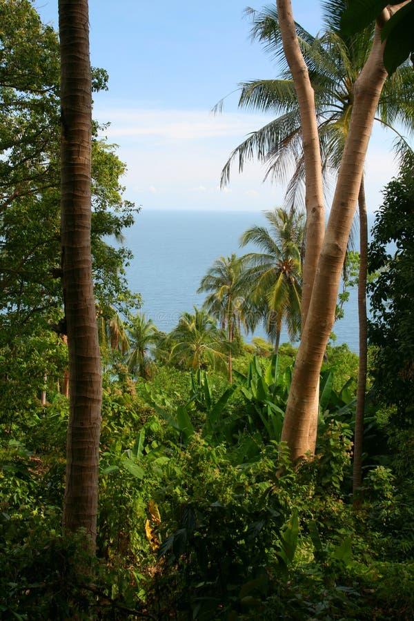 Jungle tropicale photos libres de droits
