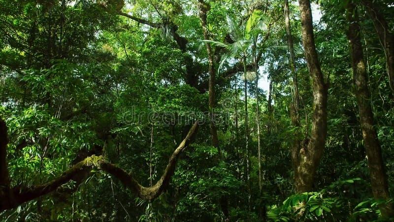 Jungle tropicale asiatique de forêt tropicale tropicale photos libres de droits