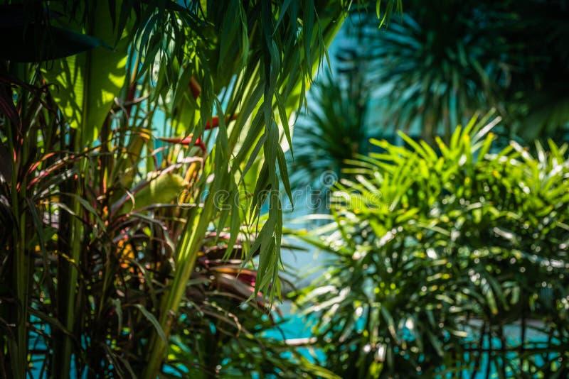 Jungle tropicale Diff?rents centrales et arbres dans une for?t dense photographie stock