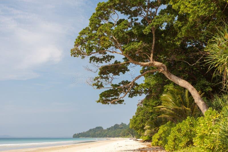 Jungle tropicale verte avec la forêt se pliant plus de image stock