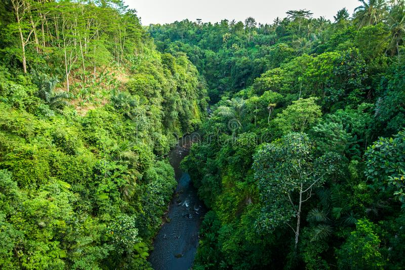 jungle in the tropics, view of the forest and the river from above royalty free stock photos
