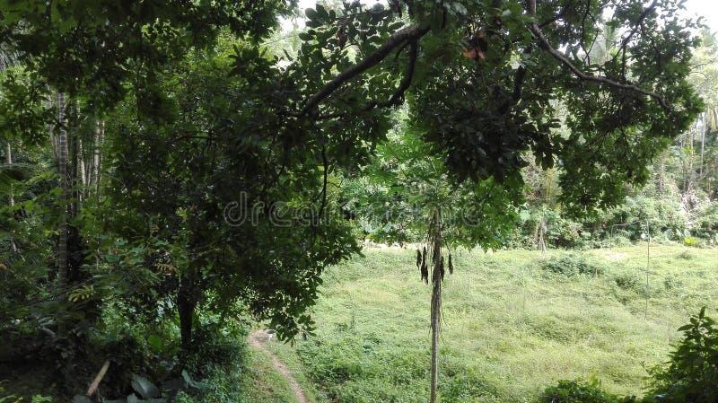 Jungle verte image libre de droits