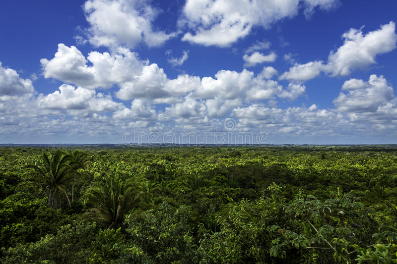 Jungle view royalty free stock image
